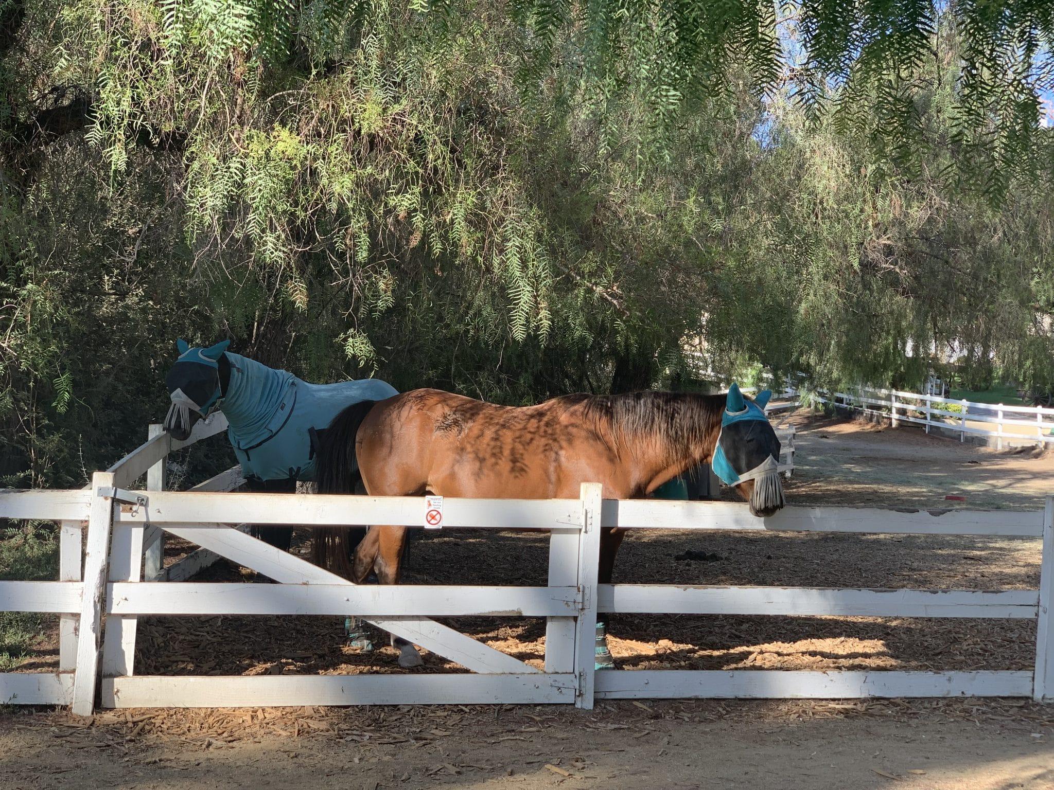 Hidden Hills Horses